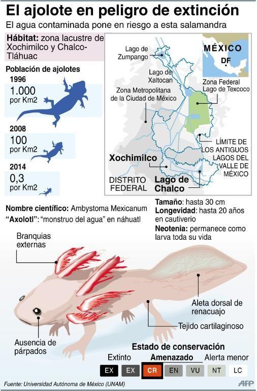 A Lot of Axolotls